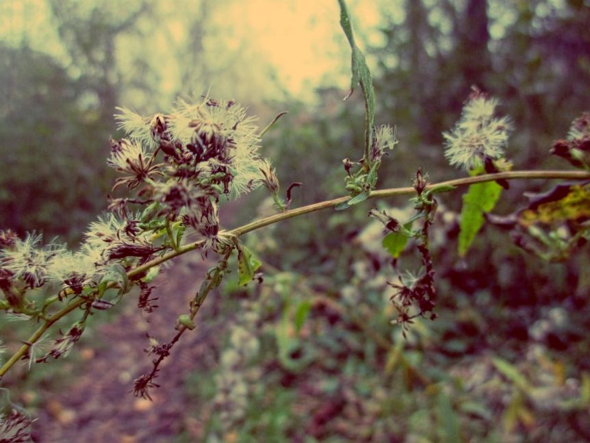 orchard6