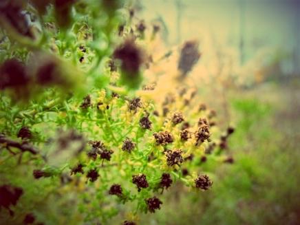 orchard_-1