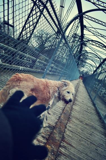 Irish and I crossing Blackfriars Bridge