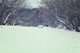 bench-in-snowy-park