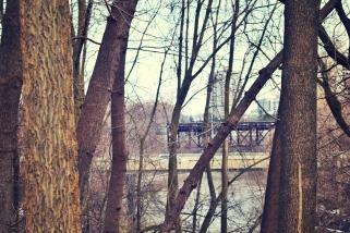 bridge-and-trees