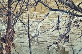icy-trees