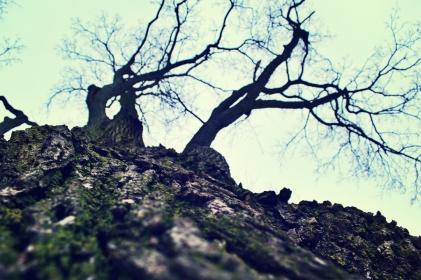 the-tree