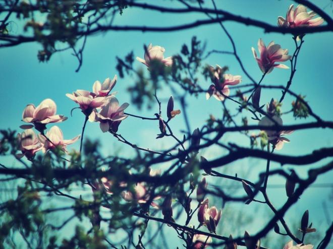 Magnolia & Maple