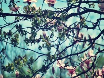 magnolia-5