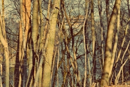 trees-of-thames-park-1