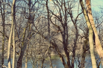 trees-of-thames-park-2