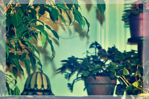 fred the ficus and friends