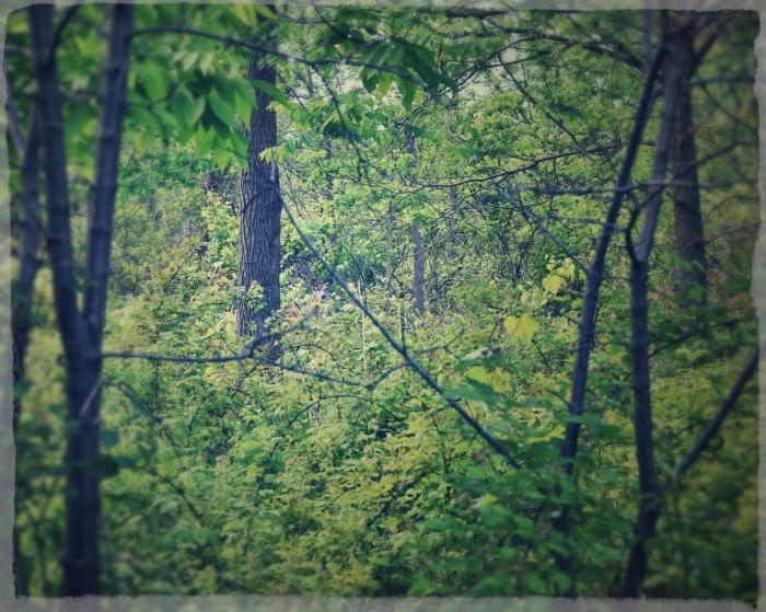 deer in the woodland- london, ontario - thetemenosjournal.com