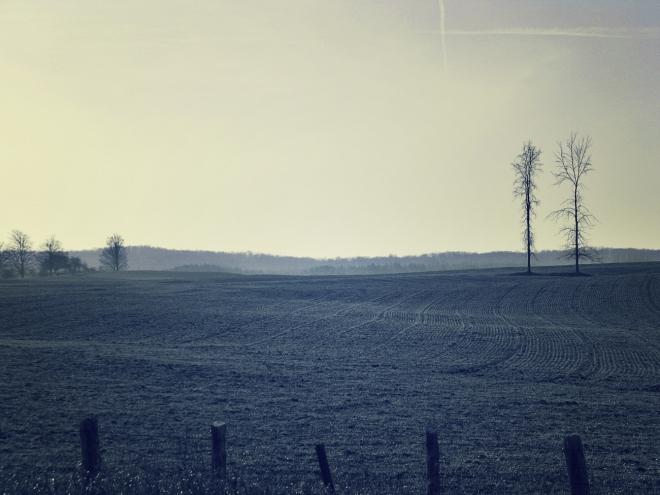 field of grey - thetemenosjournal.com