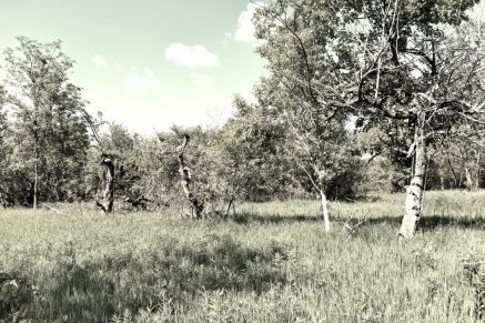 Old Apple Orchard - London, Ontario - thetemenosjournal.com