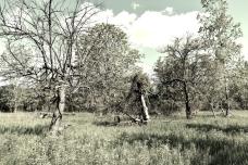 Old Apple Orchard - London, Ontario - thetemenosjournal.com