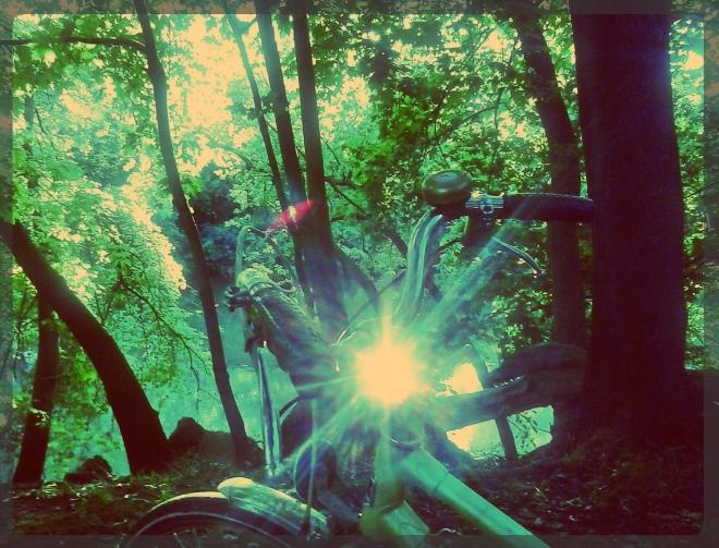 rose in reflection - thetemenosjournal.com
