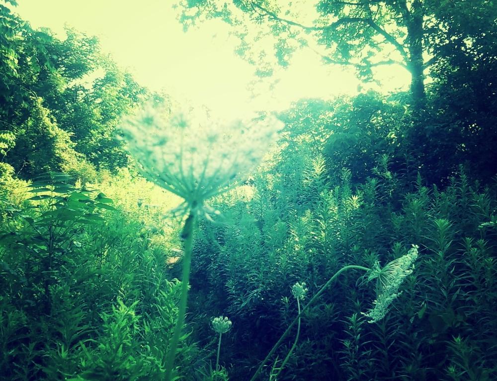 capturing sunlight - thetemenosjournal.com