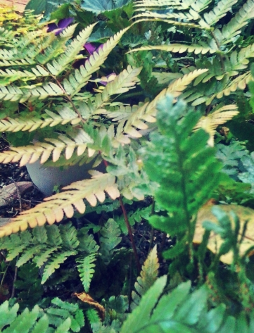 fronds of ferns 4