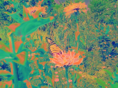 monarch 1b