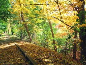 fall on the path