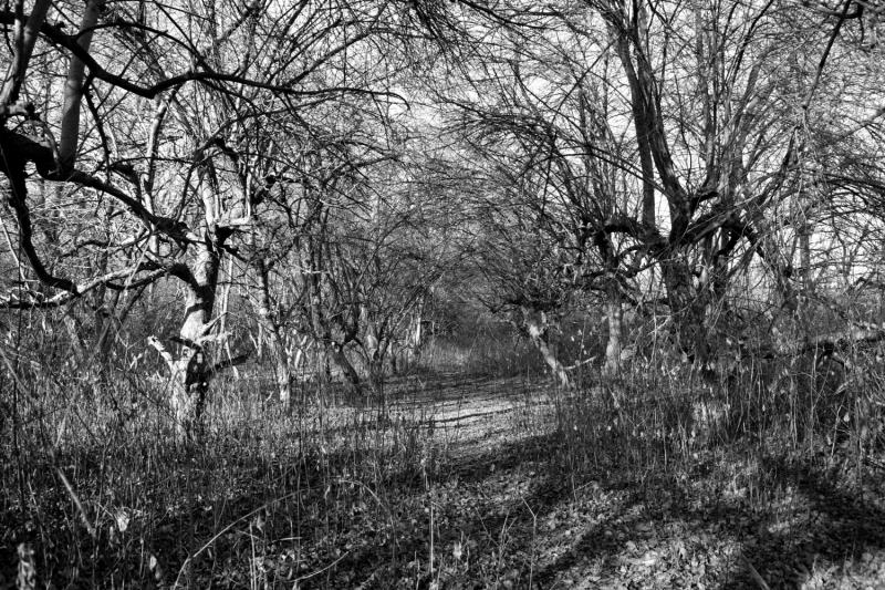 Orchard corridor
