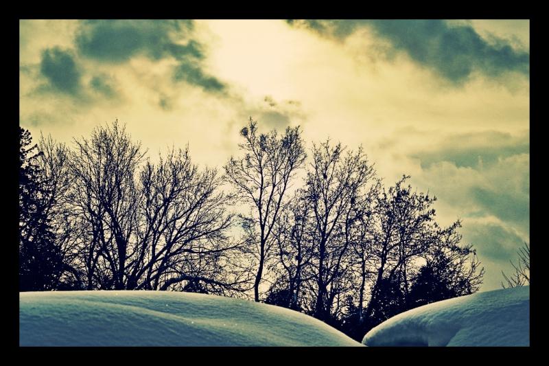 snow on yews - thetemenosjournal.com