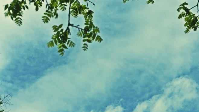 Clouds and Black Walnut Tree - thetemenosjournal.com
