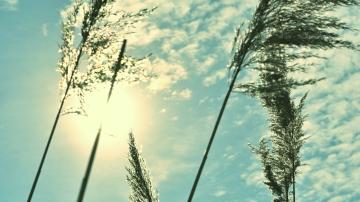 Clouds With Grass - thetemenosjournal.com