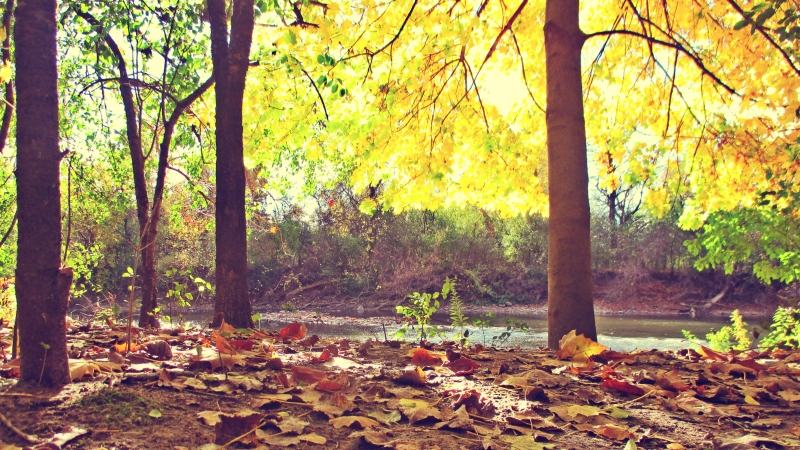 Maples And The Thames - thetemenosjournal.com