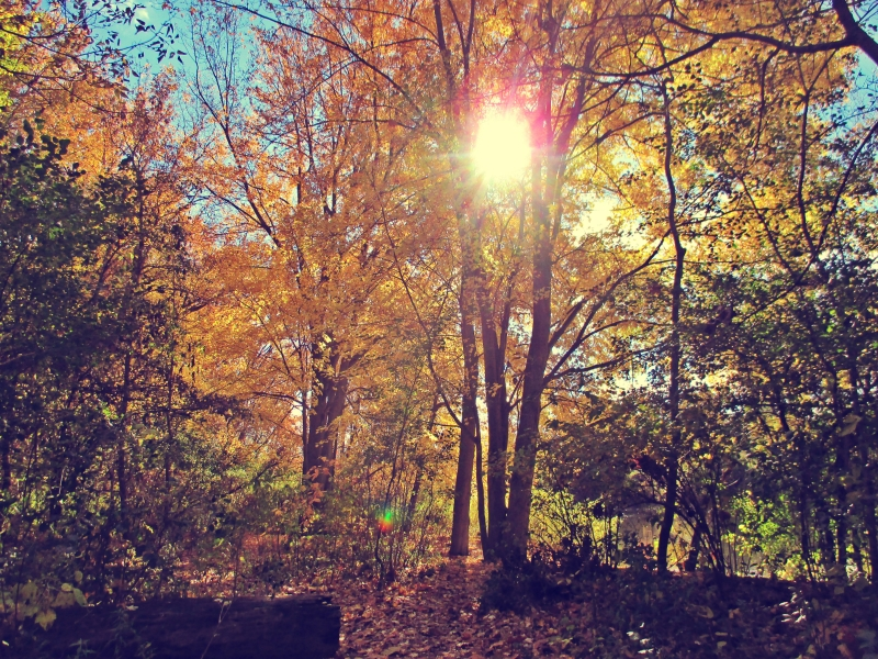 Sun Thru The Maples - thetemenosjournal.com