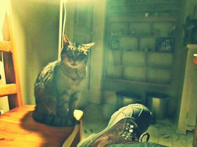 Cat On A Chair - thetemenosjournal.com