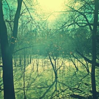Sunshine On Snowy Bog in Thames Park - thetemenosjournal.com