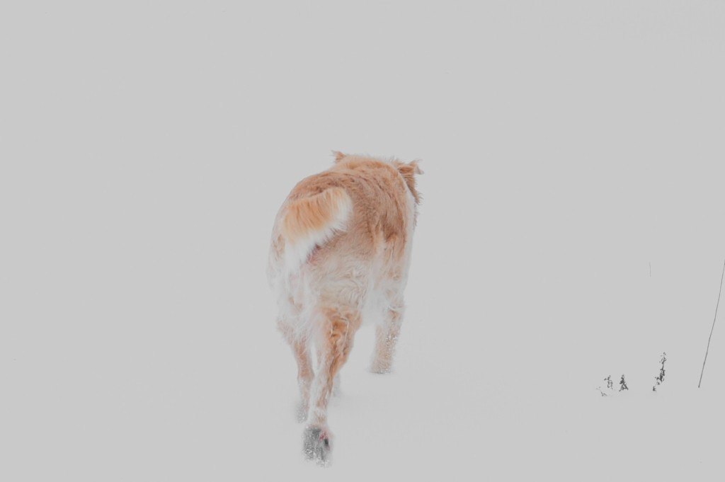 Dog In The Snow - thetemenosjournal.com
