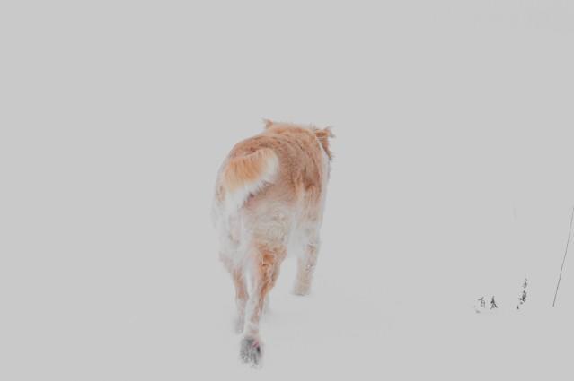 Dog In The Snow - thetemenosjournal.com
