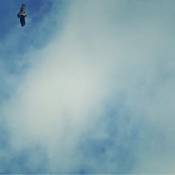 hawks overhead - thetemenosjournal.com