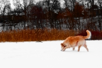Hunting The Snark In The Snow