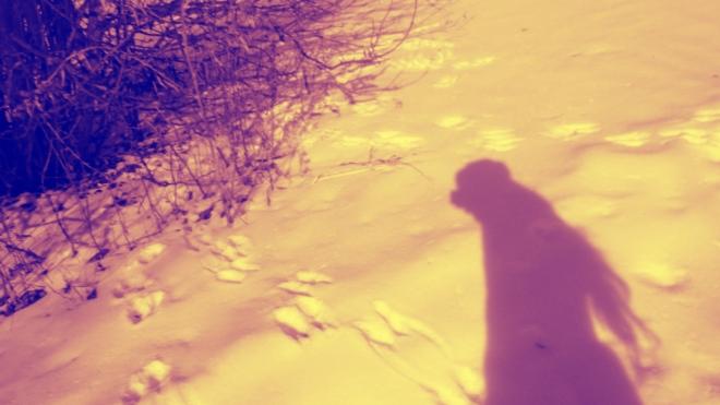 my shadow in the snow - thetemenosjournal.com