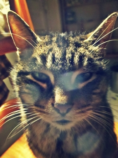 Oh Please! Cat stare - thetemenosjournal.com