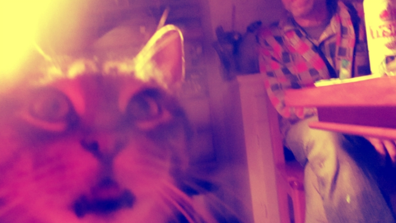 a man and his cat - thetemenosjournal.com