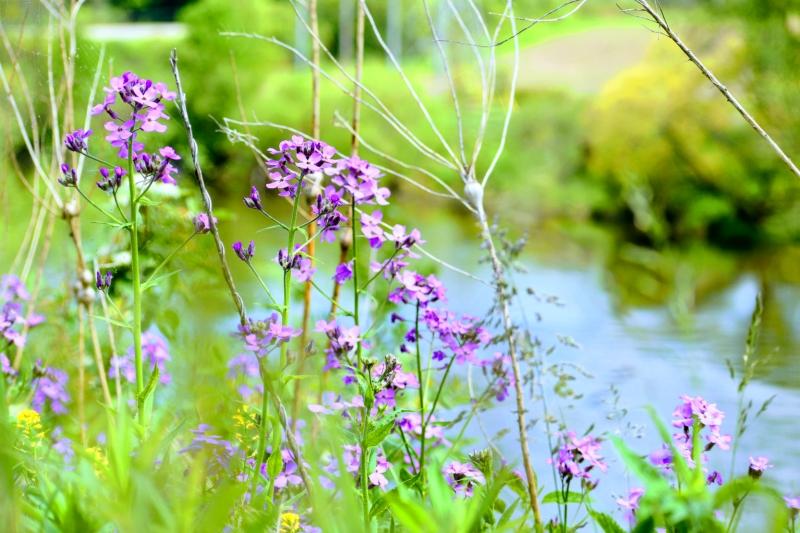 wildflowers on the riverbank - thetemenosjournal.com