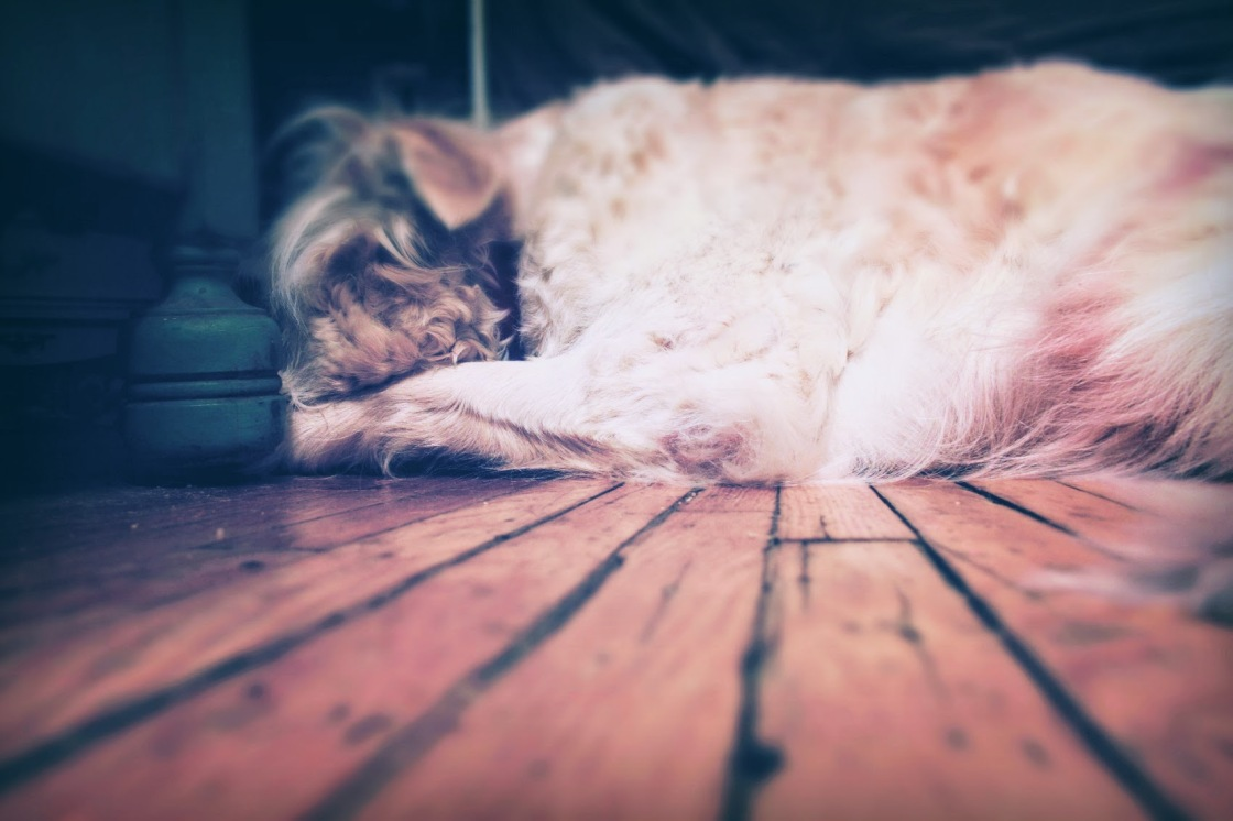 dog on floor - thetemenosjournal.com