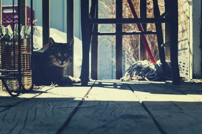 sofie the porch cat - thetemenosjournal.com
