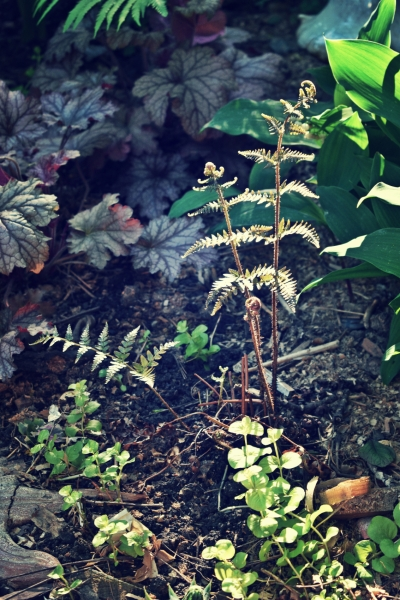 autumn fern in morning light - thetemenosjournal.com