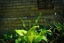 garden 3b