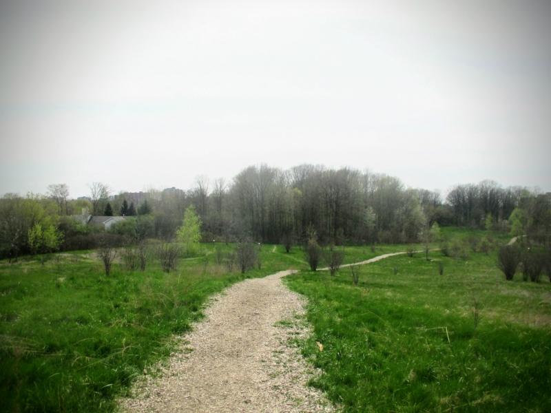 Euston Forest - London, Ontario, Canada - thetemenosjournal.com