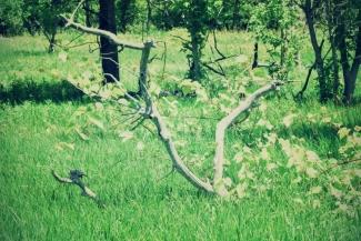 apple tree skeletons - thetemenosjournal.com