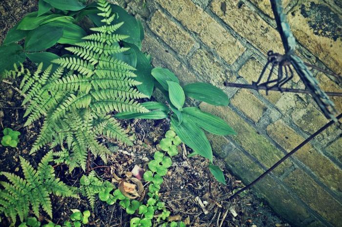 autumn fern and dragonfly decor - thetemenosjournal.com