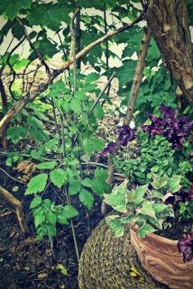 Black Raspberry with Petunias - thetemenosjournal.com