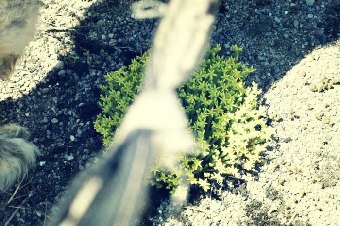 succulent on asphalt