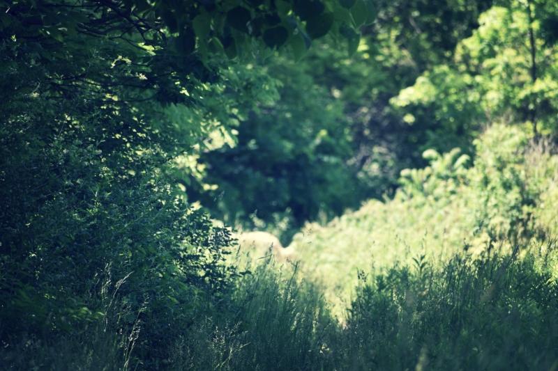 thru the trees - thetemenosjournal.com