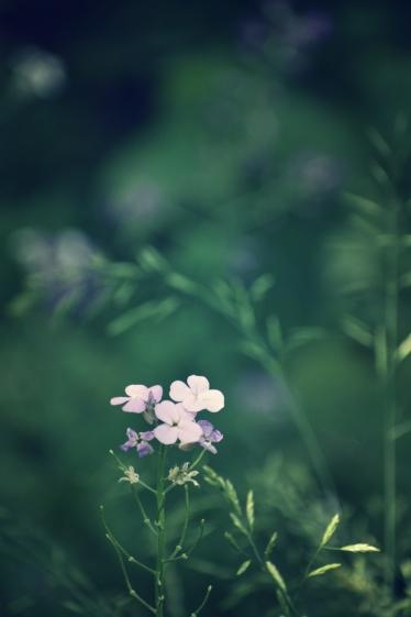woodland wild flower - thetemenosjournal.com