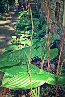 woodland-in-shadow
