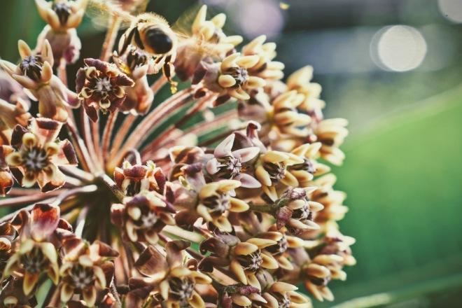 bee bum with pollen - thetemenosjournal.com
